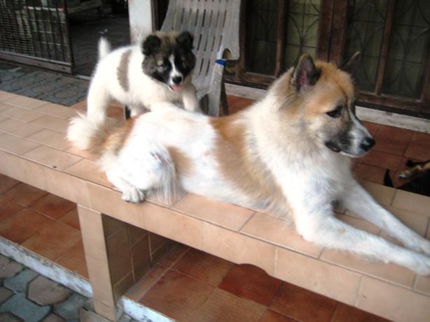 http://bangkaew.com/upload/24jan2010/IMG_1296x.JPG